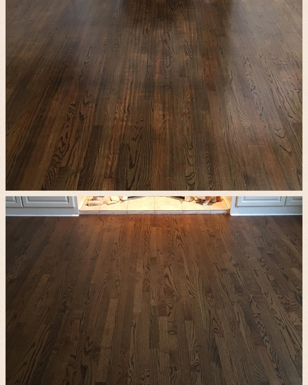 We had the pleasure of swooping in to save this floor from a seemingly bad refinish, with lots of belt scratches which leads to stain inconsistency, just days before we arrived! With our knowledge and experience, we are able to provide our customers with a beautiful and sustainable product for years to come! Please contact us for a free estimate. #transformationtuesday #oldtogold #hardwoodfloors #hardwoodflooring #oak #redoak #grandrapids #michigan #grmi #bona #jacobean #traffic #bonatraffic #beautiful #fresh #new #nwfa